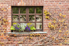 Of ivy bordered window. With flowers Stock Photos