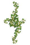 Ivy branch decor Stock Photos