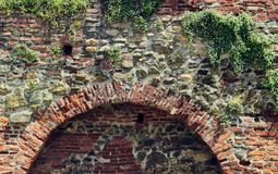 Ivy on the brick wall Stock Photos