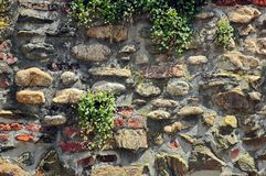 Ivy on the brick wall Stock Image