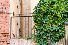 Ivy, brick wall and fence. Stock Image