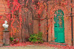 Ivy on brick walls. Stock Photography
