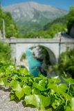 Ivy by the bridge royalty free stock image