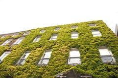 Ivy building Stock Photos