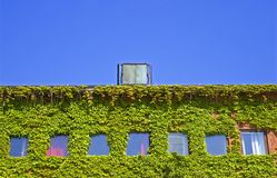 Ivy Building. Ivy covered building in Molde Norway royalty free stock photos
