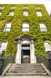 Ivy building door Stock Photos