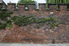 Ivy and camera on red bricked wall. Creeping Ivy and security camera on an old red bricked castle wall. The sky is cloudy white Stock Photography