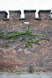 Ivy and camera on red bricked wall. Royalty Free Stock Photo