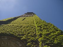 Ivy on church tower in boston Royalty Free Stock Image