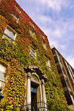 Ivy clad building. An ivy covered building on one of the great squares of Dublin Royalty Free Stock Image