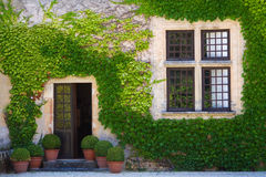 Ivy clad wall. Ivy clad house photographed in the Dordogne region of France Royalty Free Stock Photo