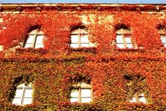 Ivy-clad wall Stock Photos