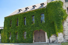 Ivy clad wall of Antwerp Castle Royalty Free Stock Images