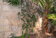 Ivy Climbing Rustic Wall Stock Photography