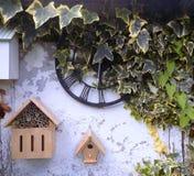 Ivy Clock rústica @ Crookham, Northumberland, Inglaterra Fotos de archivo libres de regalías