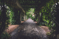 Ivy Columns Walkway in Wroclaw royalty-vrije stock foto's