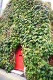 Ivy cottage, Christchurch, Dorset. Stock Photo
