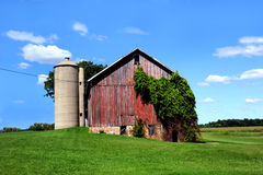 Ivy covered barn Stock Images