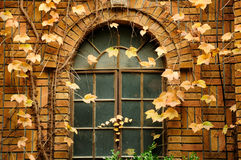 Ivy covered Brick building and window Royalty Free Stock Photos