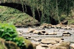 Ivy Covered Bridge Over o pavimento do rio Imagem de Stock