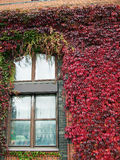 Ivy covered building 03 Royalty Free Stock Photography