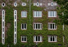 Ivy-covered building. Facade of a multi-storey building covered in ivy Stock Photography