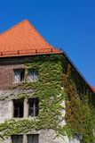 Ivy Covered Building Royalty Free Stock Images