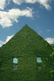 Ivy Covered Building Royalty Free Stock Photography