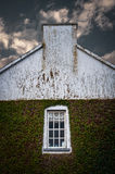 Ivy covered building facade Royalty Free Stock Photos