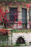 Ivy covered building facade Royalty Free Stock Images