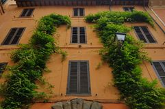 Ivy covered building, Rome, Italy Royalty Free Stock Images