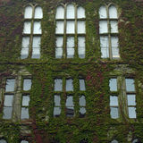 Ivy Covered Building Royalty Free Stock Image