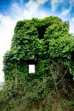 Ivy covered castle Stock Image