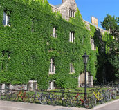 Ivy covered college building Royalty Free Stock Photos