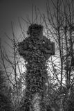 Ivy covered cross Bradford cemetery. Black and white image of an ivy covered Celtic cross at Bradford cemetery, England with vignetting Stock Image