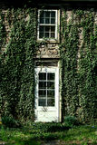 Ivy covered door and window Royalty Free Stock Photos
