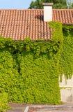 Ivy Covered Exterior Wall Lizenzfreies Stockfoto