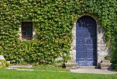Ivy Covered Exterior Wall eines historischen Gebäudes Lizenzfreie Stockfotografie