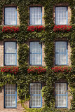 Ivy covered facade Stock Photography