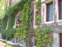 Ivy Covered Facade Royalty Free Stock Photo
