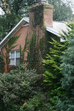 Ivy Covered Home. A red brick home in a wooded area, covered with ivy stock images