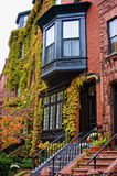 Ivy covered home. Colorful lush foliage covering townhouses in beacon hill boston on a fall afternoon Royalty Free Stock Images