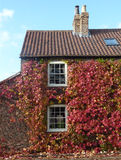Ivy covered house Stock Images
