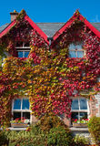 Ivy covered house Royalty Free Stock Images