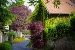 Ivy-covered house, tree along the street Royalty Free Stock Image