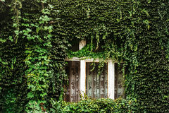 Ivy covered house wall Royalty Free Stock Photography