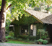 Ivy covered old house. Wooden shingles large windows, big tree and lots of green surrounds it Royalty Free Stock Photos