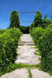 Ivy covered old stairs Stock Photography