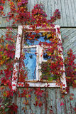 Ivy-covered old window on the wall Royalty Free Stock Images