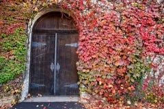 Ivy Covered Old Winery Door Imagen de archivo